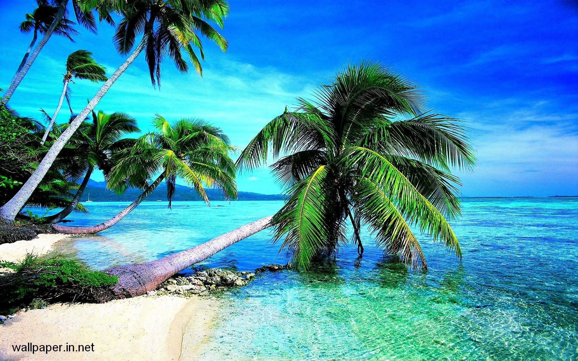 1920x1200 Tropical Island Wallpaper Free Wallpapersafari Tropical Blue Sea Clear Sky White Sand B Beach Wallpaper Hd Wallpapers For Pc Attractive Wallpapers