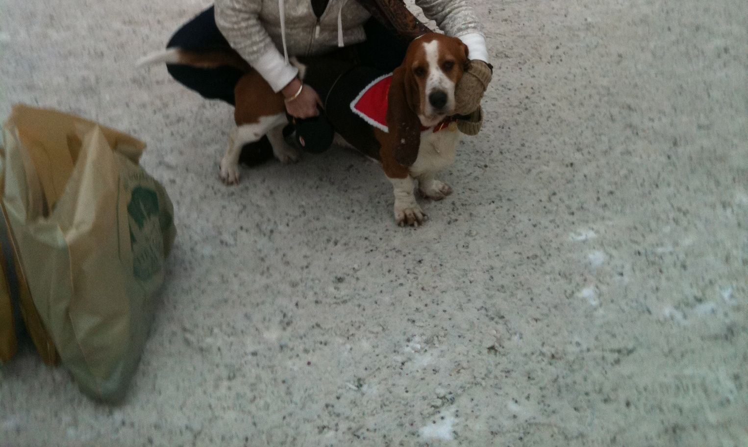 Even In Austria A Basset Is An Attraction With Images Dogs