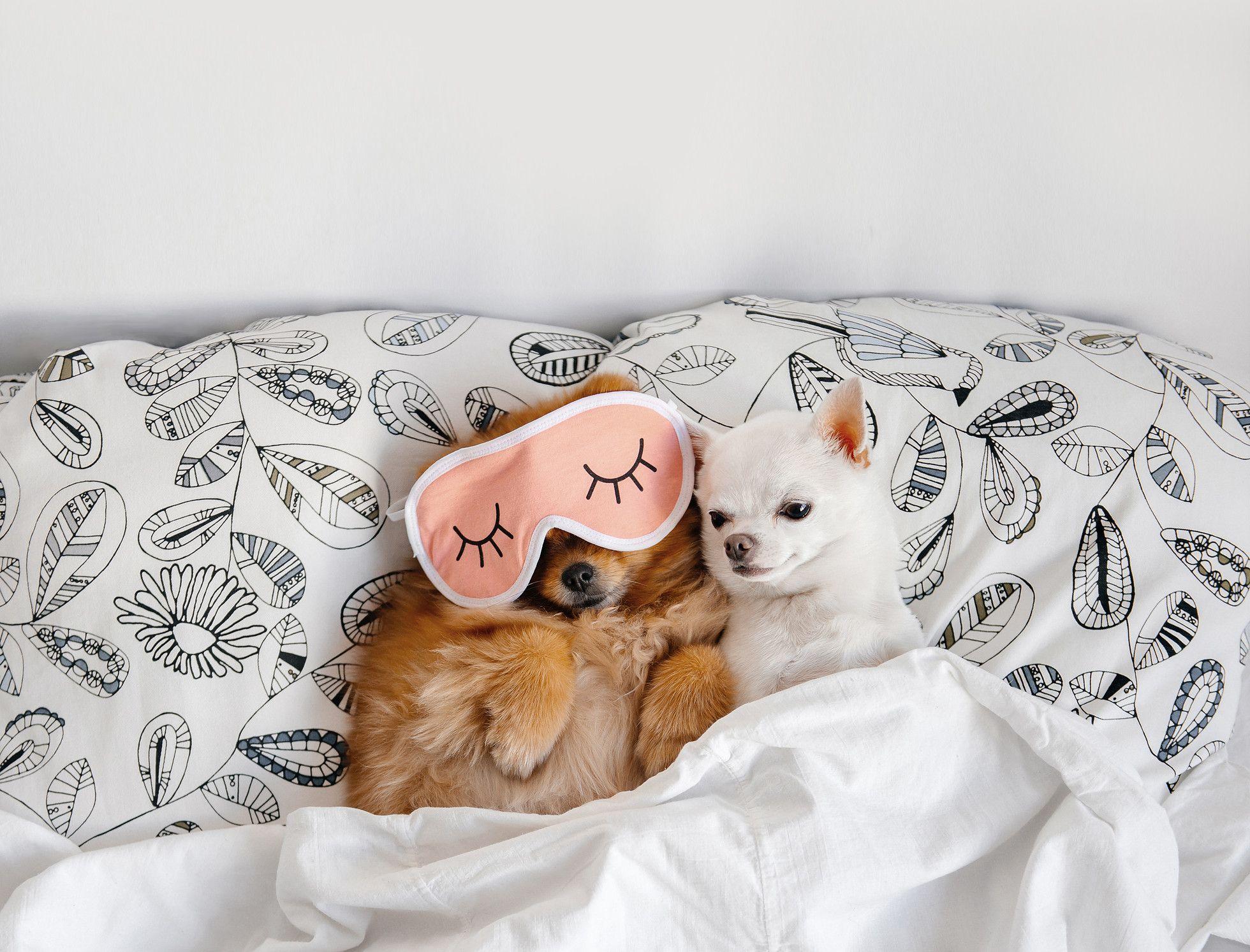 Puppies for sale Columbus, Ohio Sunrise Pups Your Next