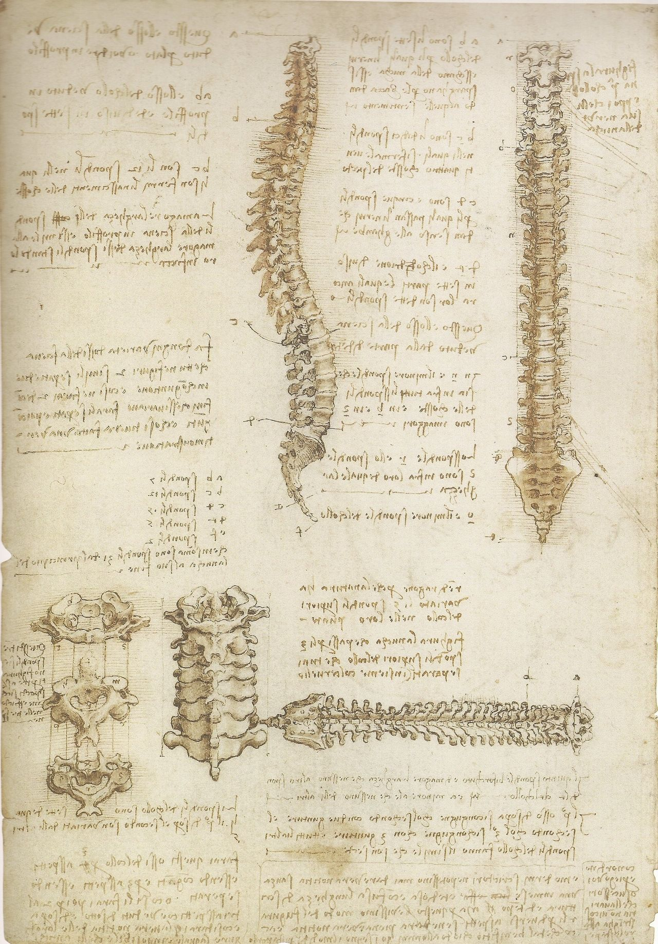 Backbone drawing, by Leonardo da Vinci | Leonardo da Vinci ...