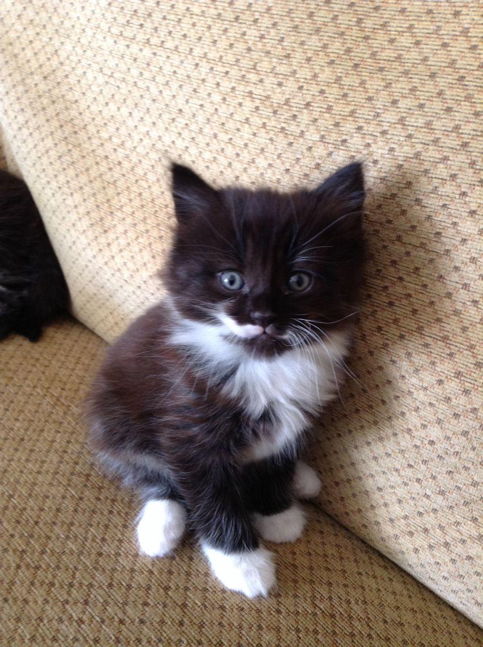 black and white fluffy