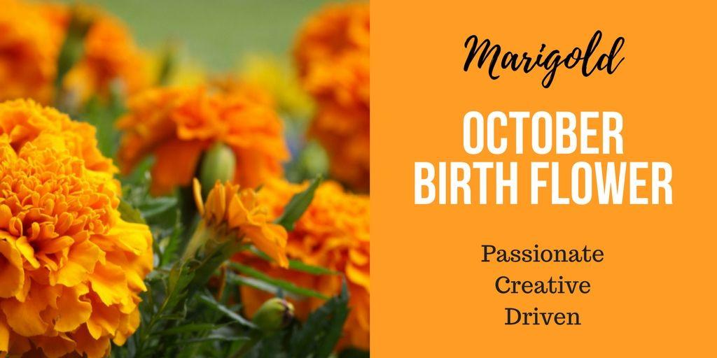 october birth flower
