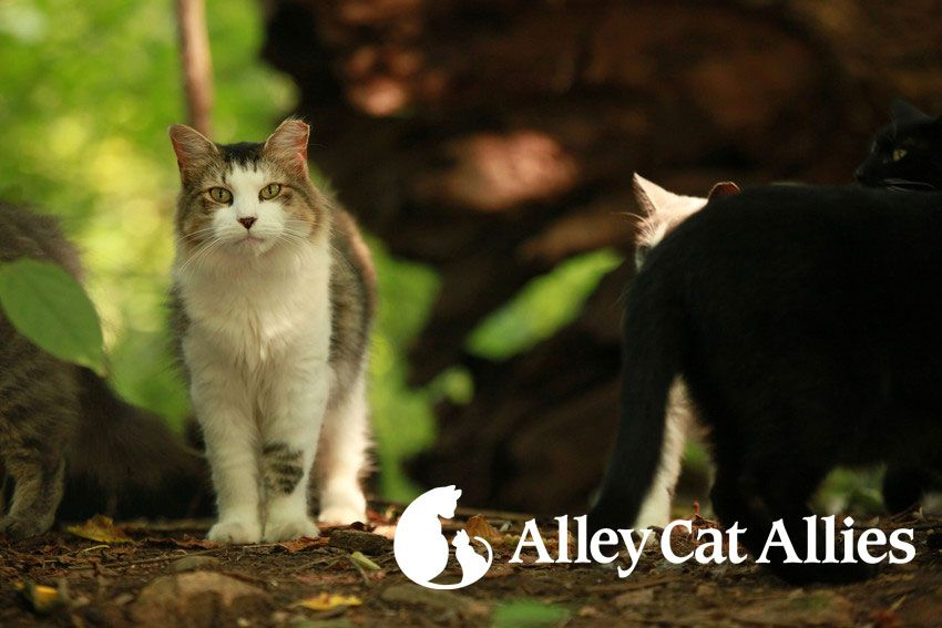Alley Cat Allies -Thank You for Signing the Pledge Support - community petition