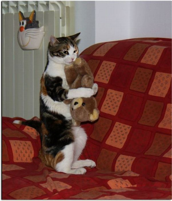 cat with pal