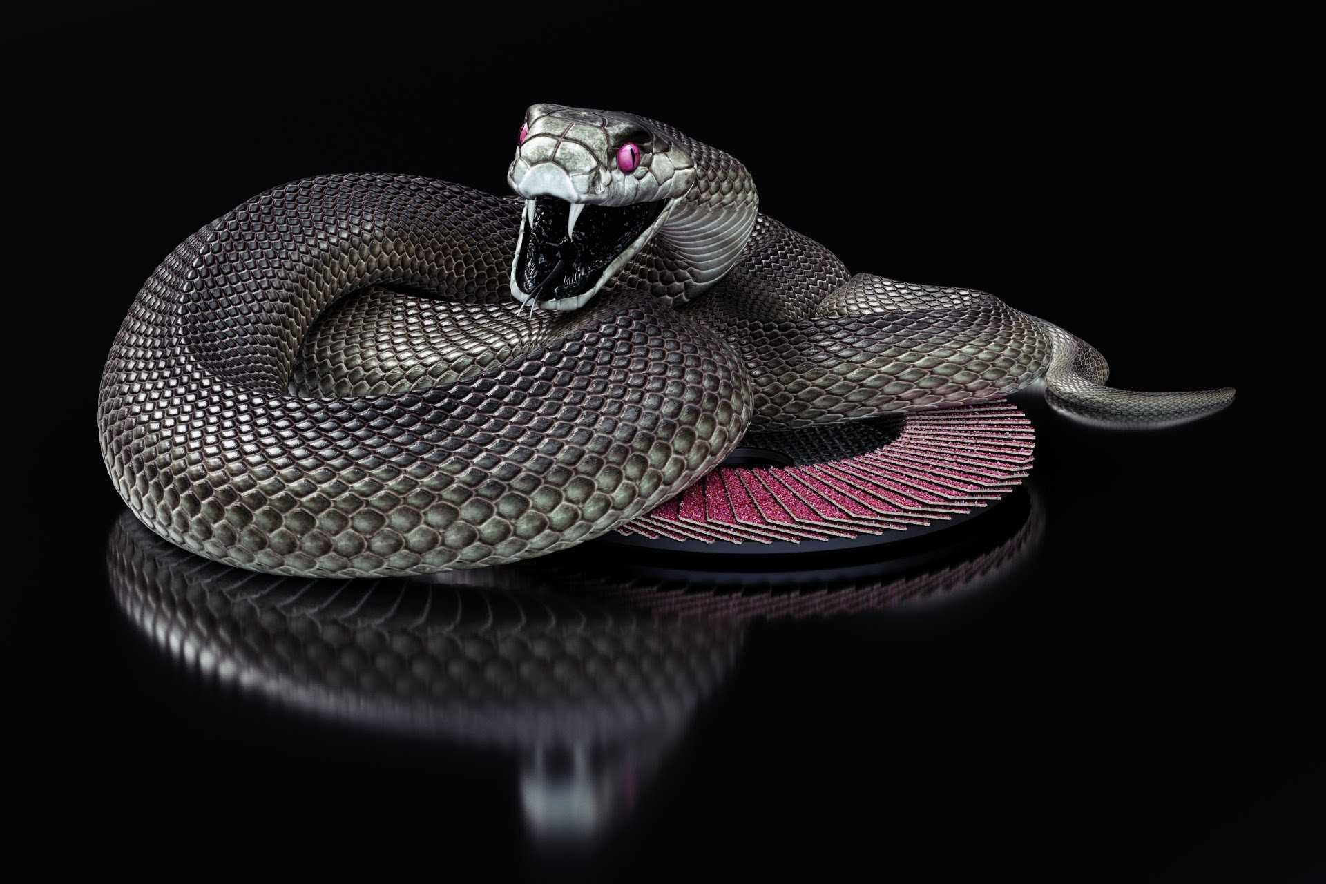 undefined Black Snake Wallpapers (43 Wallpapers