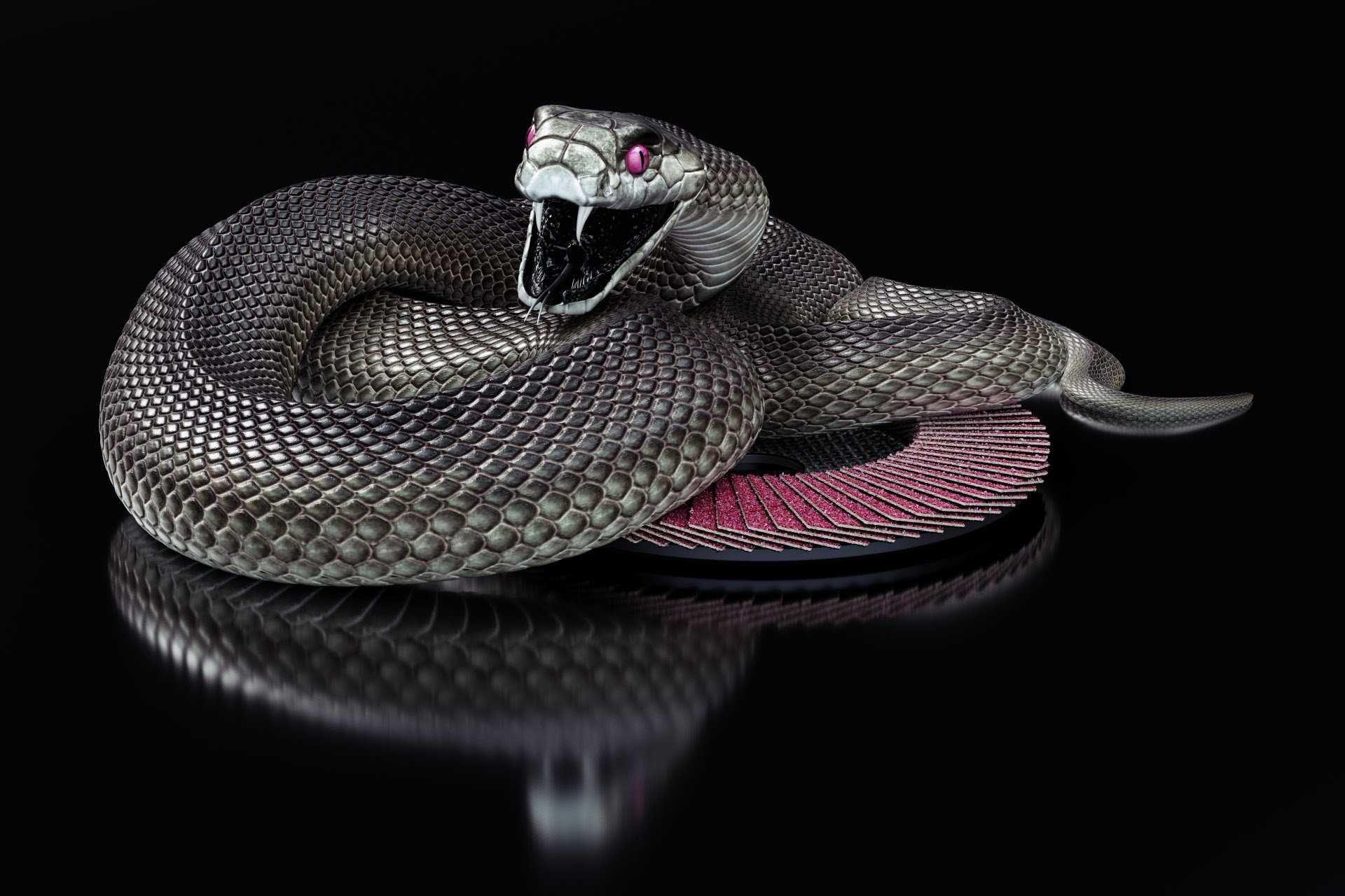 Pin By Ellen Tanner On Snakes Snake Wallpaper Black Mamba Black Mamba Snake