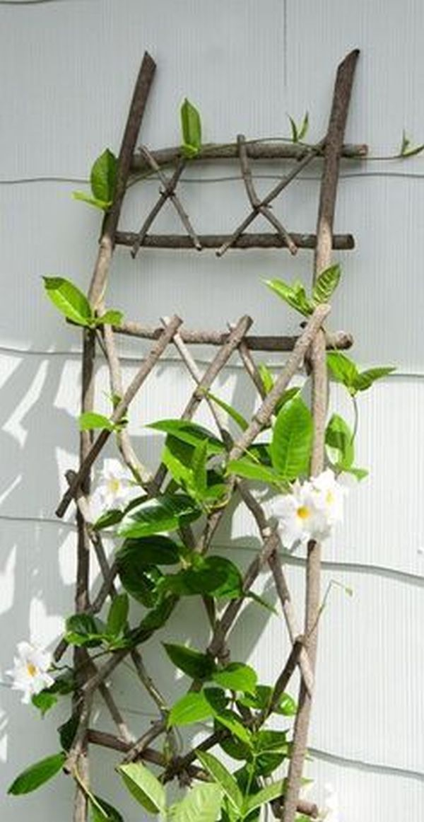 Decorations from scrap branches in new projects for gardens