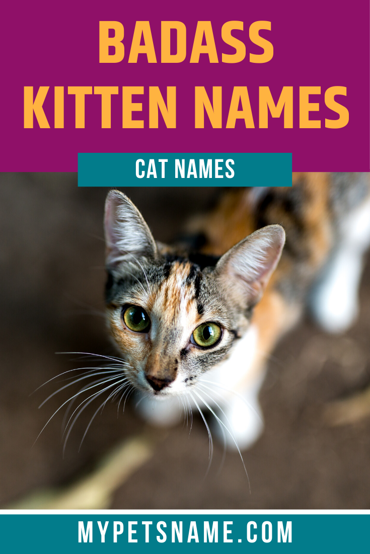 Badass Kitten Names In 2020 Kitten Names Pet Names Cat Names