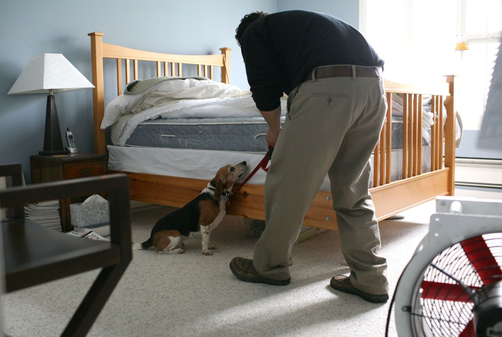 Everything You Need to Know to Get Rid of Bed Bugs Dogs