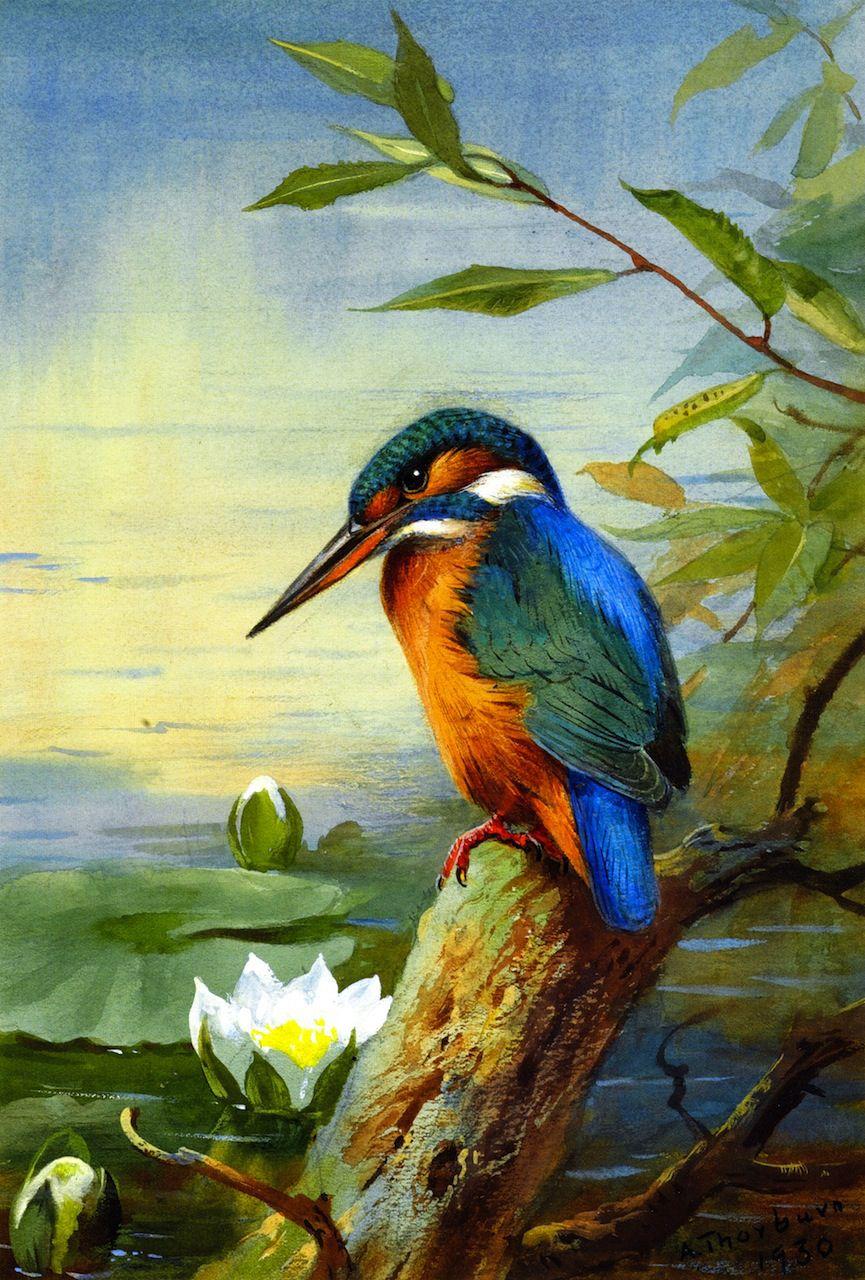 "dappledwithshadow: "" Kingfisher Archibald Thorburn 1930 Private ..."