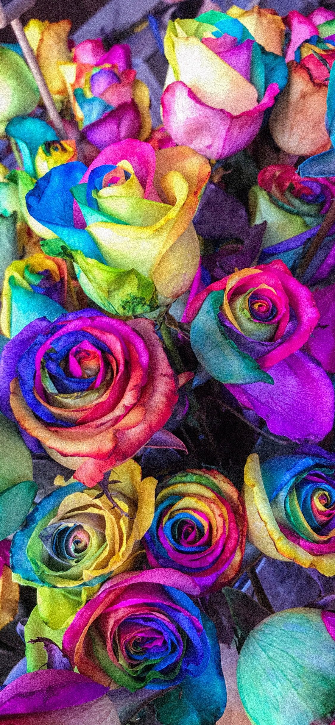 Pin By Lexi Jean On Iphone Wallpaper With Images Rainbow Roses