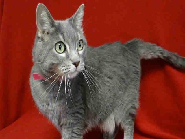Our Animals Cat Adoption Animal Control Pet Adoption