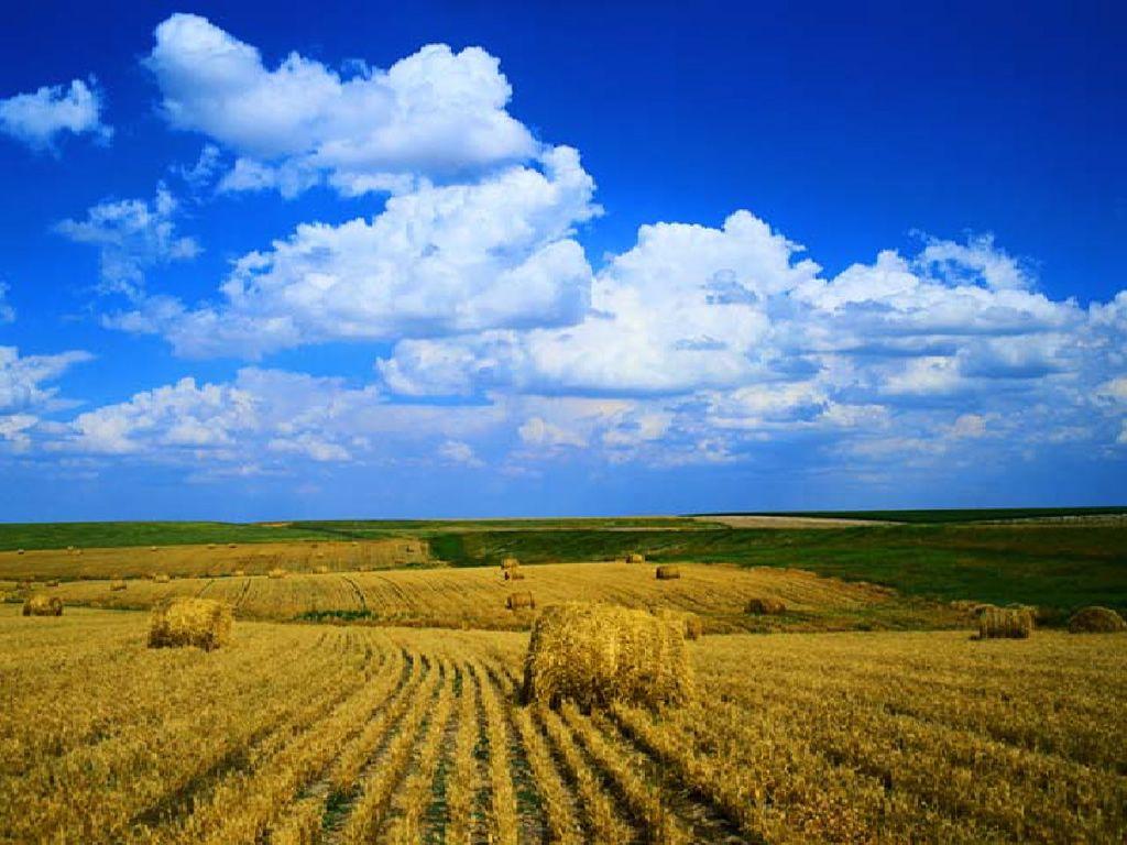 seasonal backgrounds | thanksgiving harvest - seasonal wallpaper