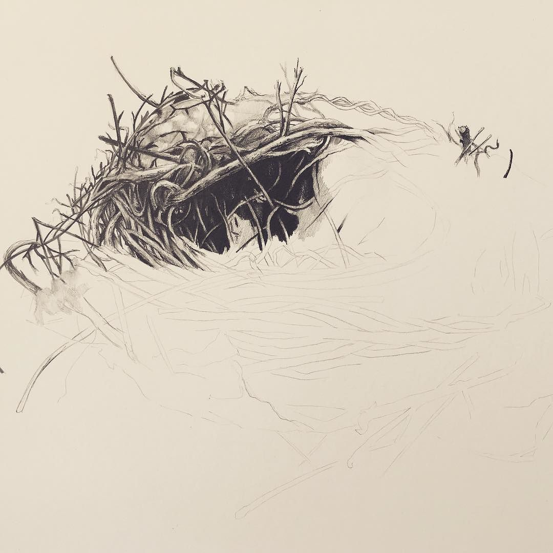 New drawing. Nest in graphite for @kymbenny :) #graphite # ...