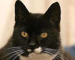 Creme Puff (August 3, 1967 – August 6, 2005) was an American cat who died aged 38 years and 3 days. She was the oldest cat ever recorded, according to the 2010 edition of Guinness World Records. Wikipedia #cremepuff