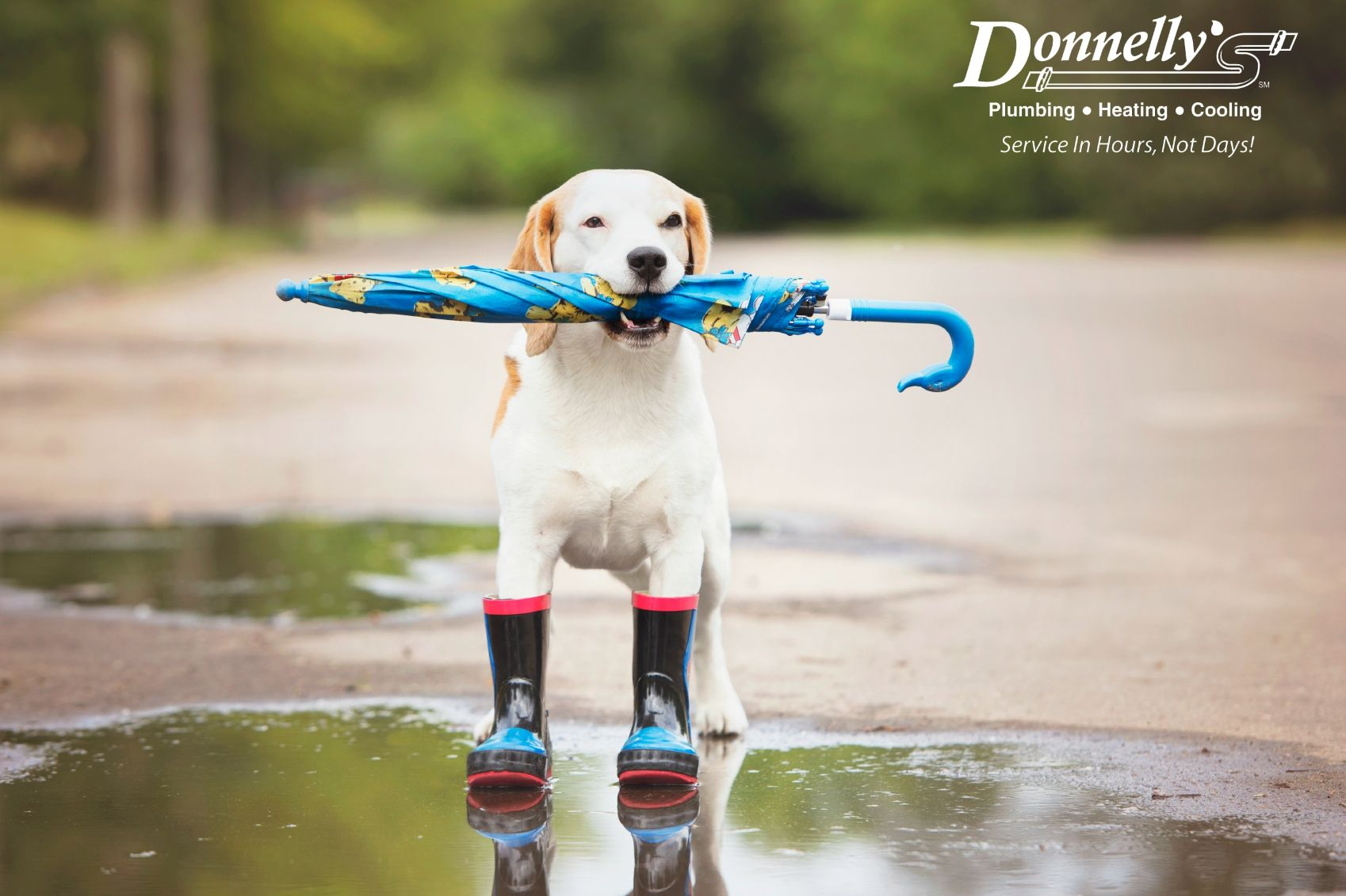 Prevent Your Basement From Flooding With This 1 Quick Tip Dogs