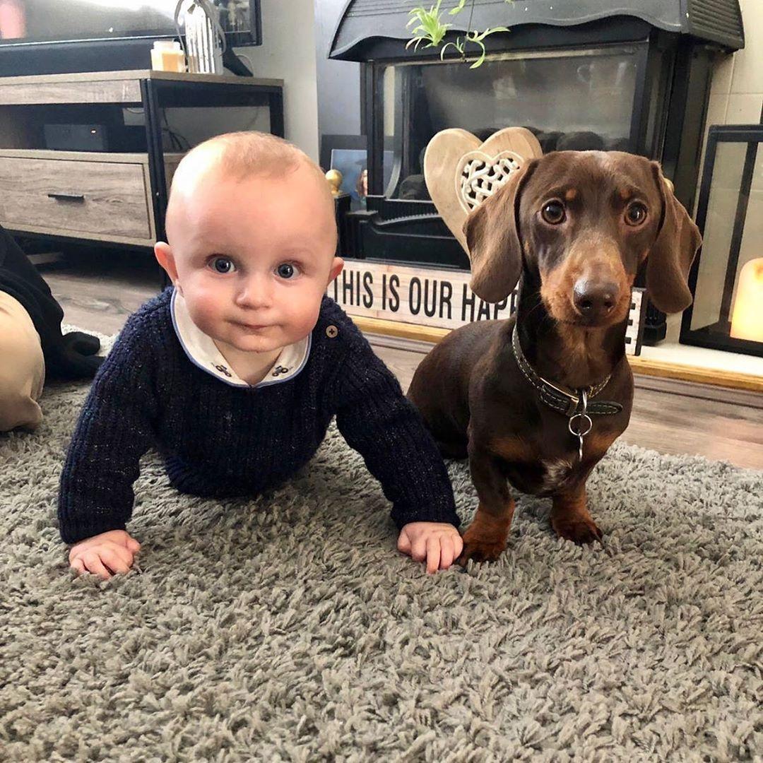 Mans best friend 🐶 love my cousin Ernie 💖 #baby #babies #newborn #newbornbaby #babiesofinstagram #baby2020 #bornin2020 #mummy #newmum #babyboy #babiediaries #babylife #babyblog #outfit #ootd #babyoutfit #babyromper #babystyle #stylish #babyootd #littleboy #6monthsold #mansbestfriend #babyanddog #dog #dachshund