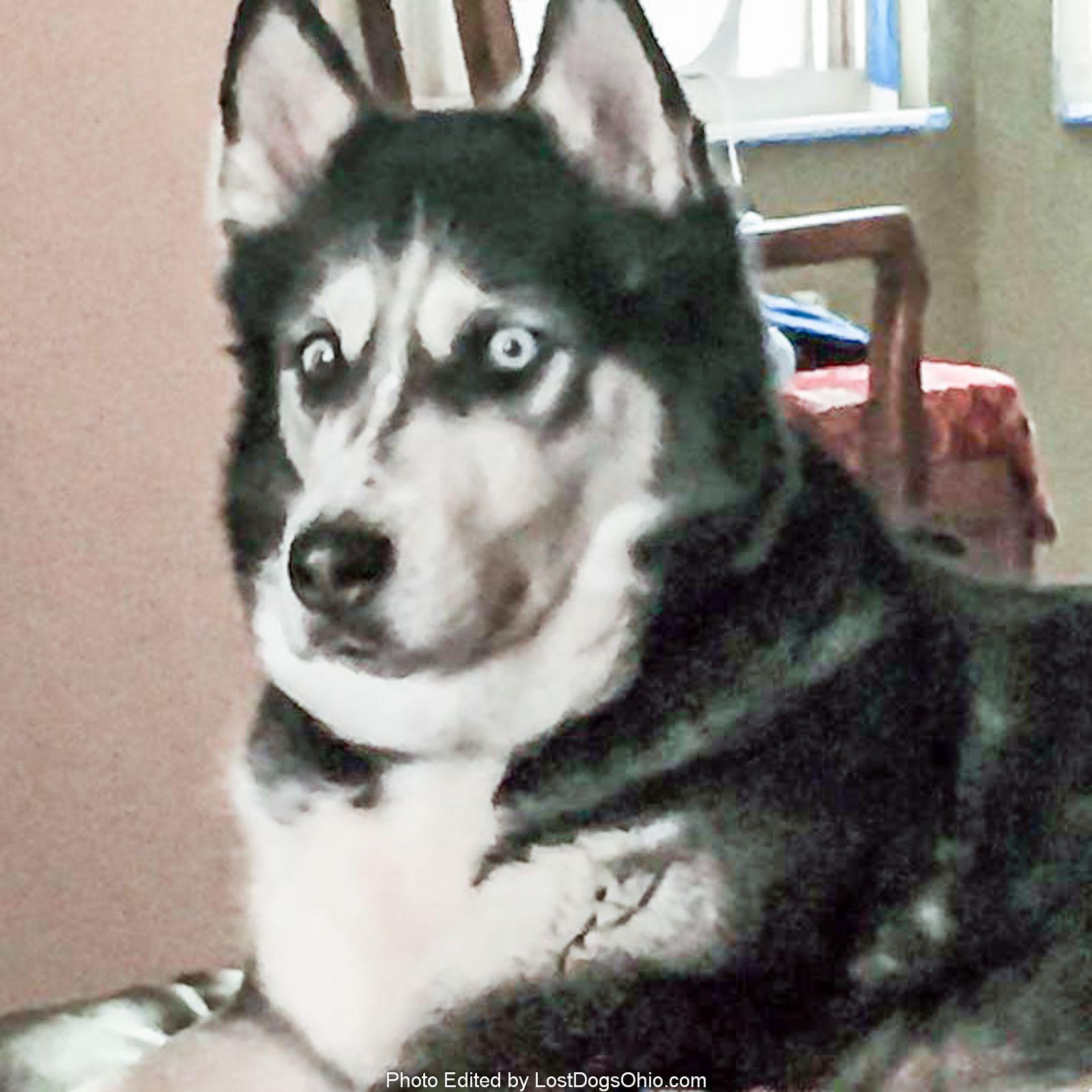 Lost Dog Female Saint Paris Oh Usa 43072 Last Seen Park Ave