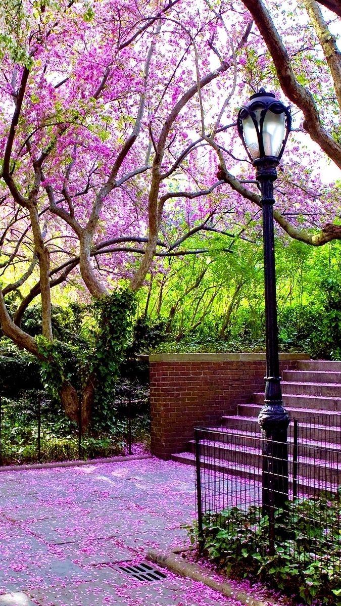 Bench Petals Walkway Trees Green Park Iphone Wallpaper