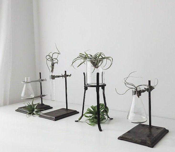 Stand Designs Quiz : Vintage labware plant stand beaker vases pinterest