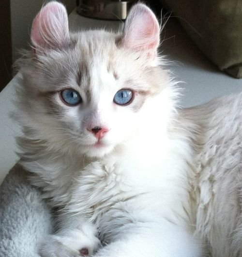http://killer-cat.tumblr.com/ | Animals | Pinterest ...