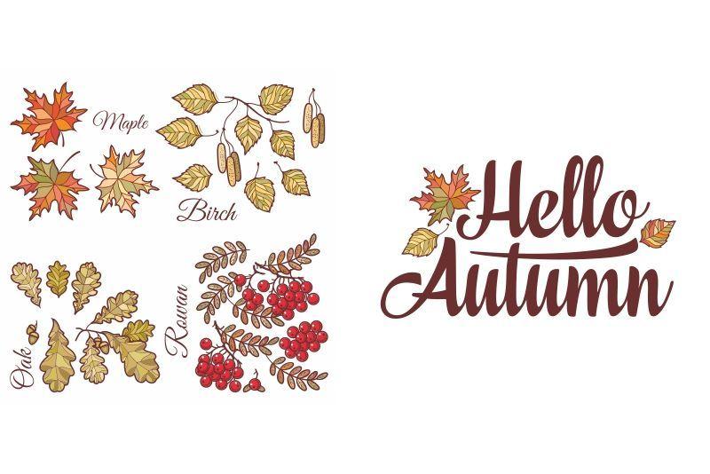 Hello Autumn. Autumn leaves set #helloautumn Hello Autumn lettering phrase text. Autumn leaves set with Rowan, maple, birch and oak.Autumn quote. Fall leaf design. Foliage forest... #helloautumn