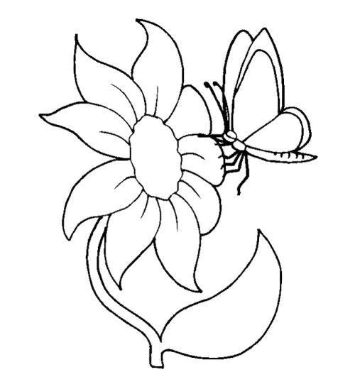 Sun Flower And Butterfly Coloring Pages