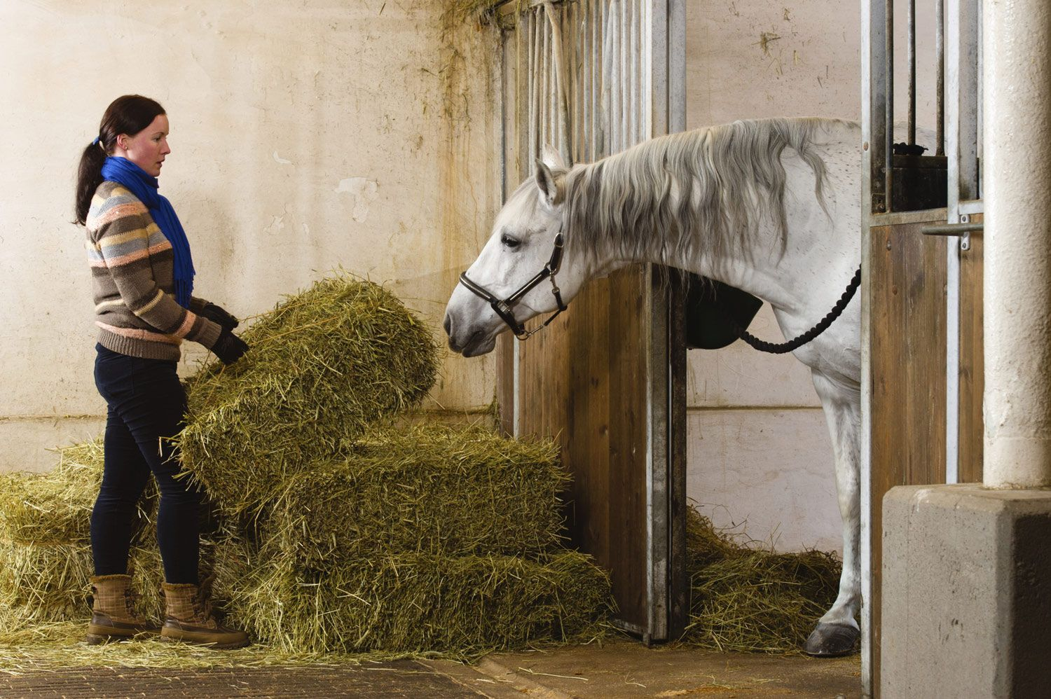 Research On Hay Steaming For Horses In 2020 Horse Feed Horse Hay Equine Nutrition