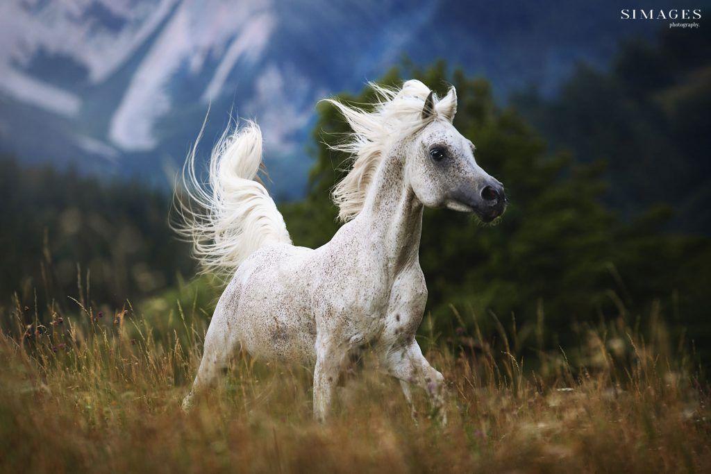 pferde bilder | simages tierfotografin | pferde bilder