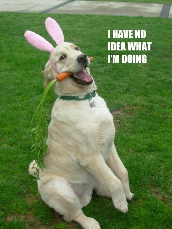 Funny Easter Pictures Of Dogs