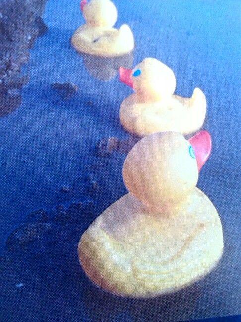 Enten baden draußen