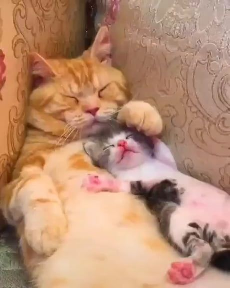 Kitten and mommy
