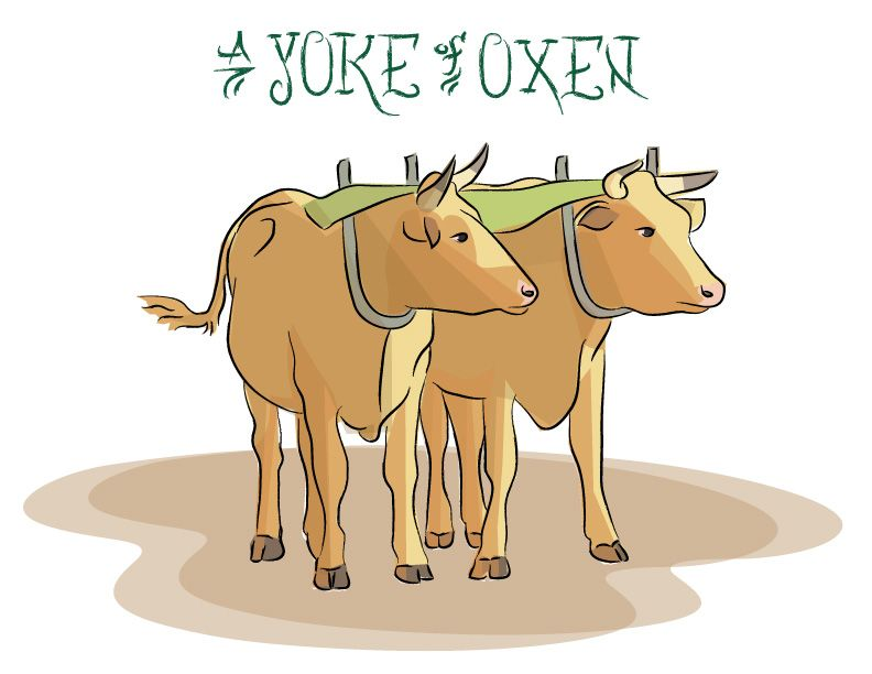 Ian Rogers A Yoke Of Oxen Art Blog Graphic Oxen