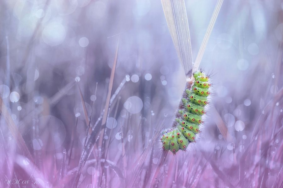 """Climb"" by Wil Mijer - Photo 118550337 - 500px"