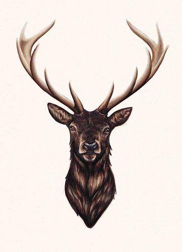 Stag Shone Cerf Tatouage Tatouage Cerf Dessin