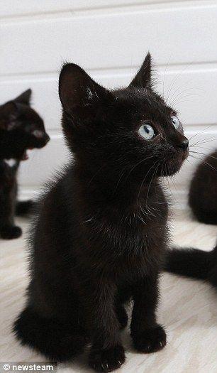 Treffen Sie die Katzen die niemand will  nur weil sie schwarz sind