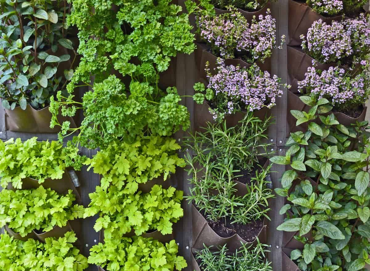 Small Space Gardening Tips for Your Apartment is part of Planting herbs, Companion planting, Plants, Vertical herb garden, Small space gardening, Plant pests - Living in an apartment shouldn't limit your creative gardening juices  There are plenty of small space gardening options to keep your green thumb alive