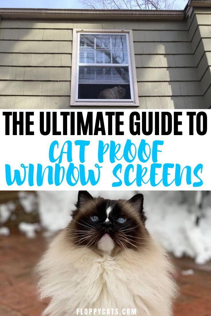 Cat proof window screens a guide pet proof window