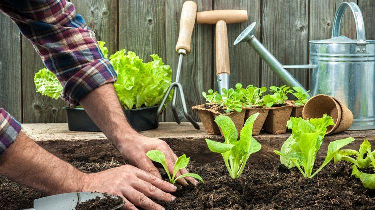 Moestuin beginnen in mei de tuin op tafel duurzaam recycle