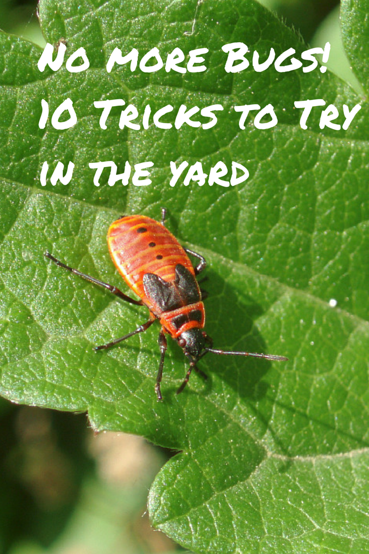 10 Time Tested Tricks For A Bug Free Backyard Garden