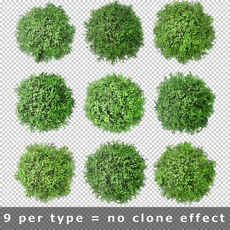 Pics For Tree Top View Png Trees Top View Tree Photoshop Tree Psd