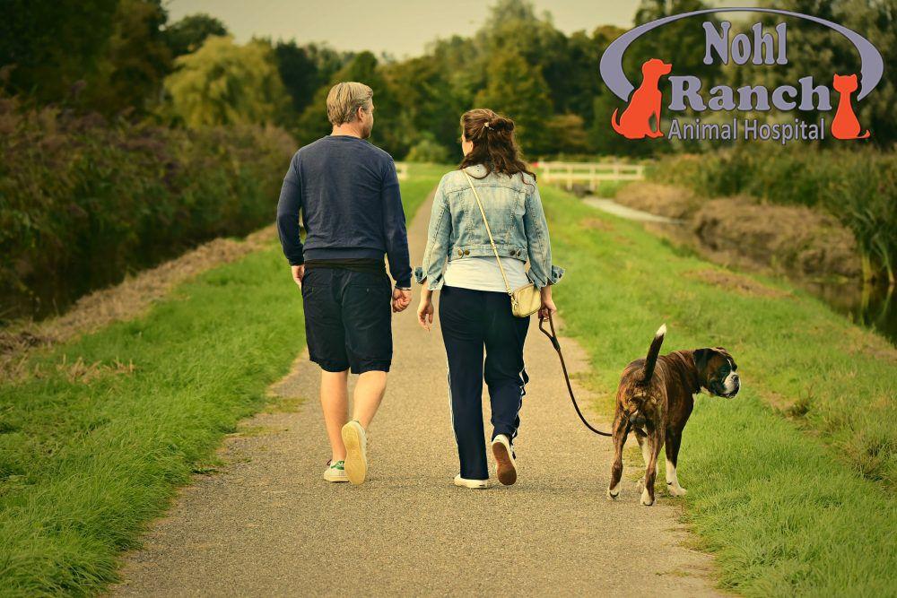 National Walk Your Pet Month In 2020 Dog Walking Dog Sitting Dog People