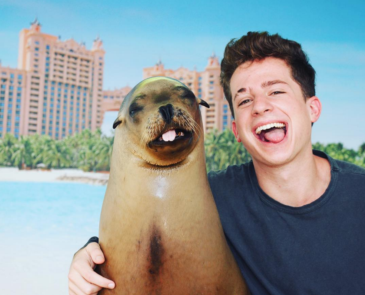 best images about charlie puth see you again grammy nominee charlie puth enjoying his time one of our sea lions