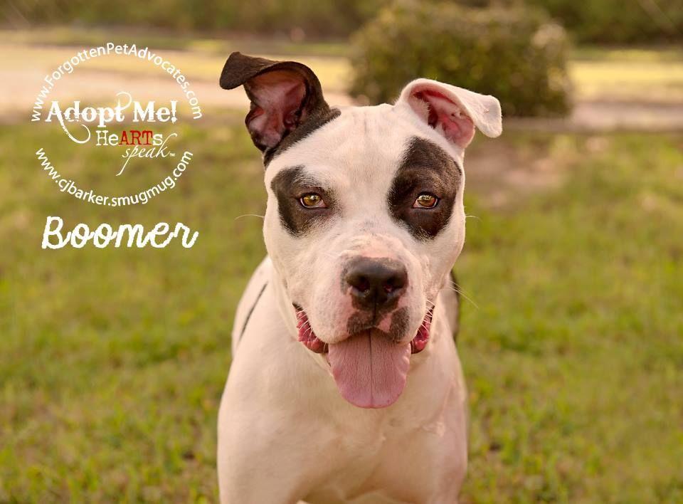 030716houston the pet advocates houston
