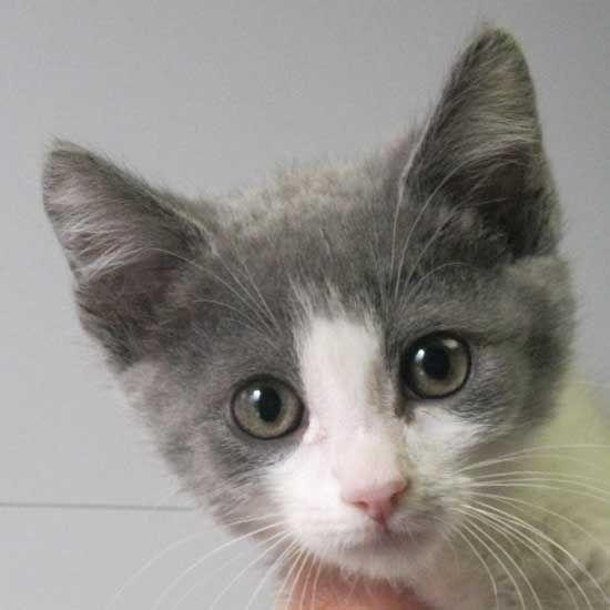 Adopt A Pet Cat Adoption Pet Adoption Dog Adoption