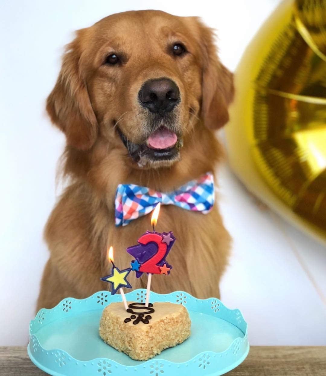This Is The Way You Eat A Birthday Cake Dogs Golden Retriever