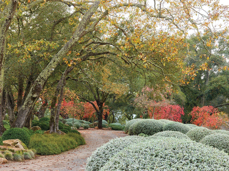 california gardens, st. eden garden, Oakville: red fall color Cornus ...