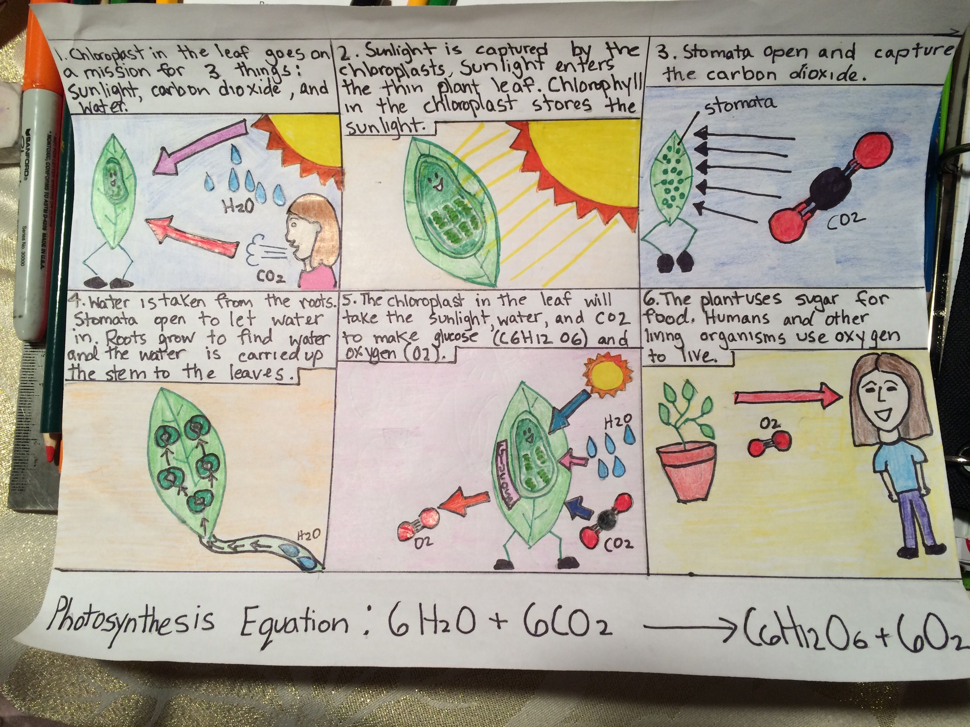 Photosynthesis Project 7th Grade Comic Strip