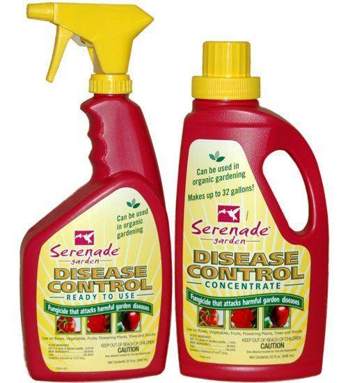 Problems In Growing Tomatoes Serenade Garden Disease 400 x 300