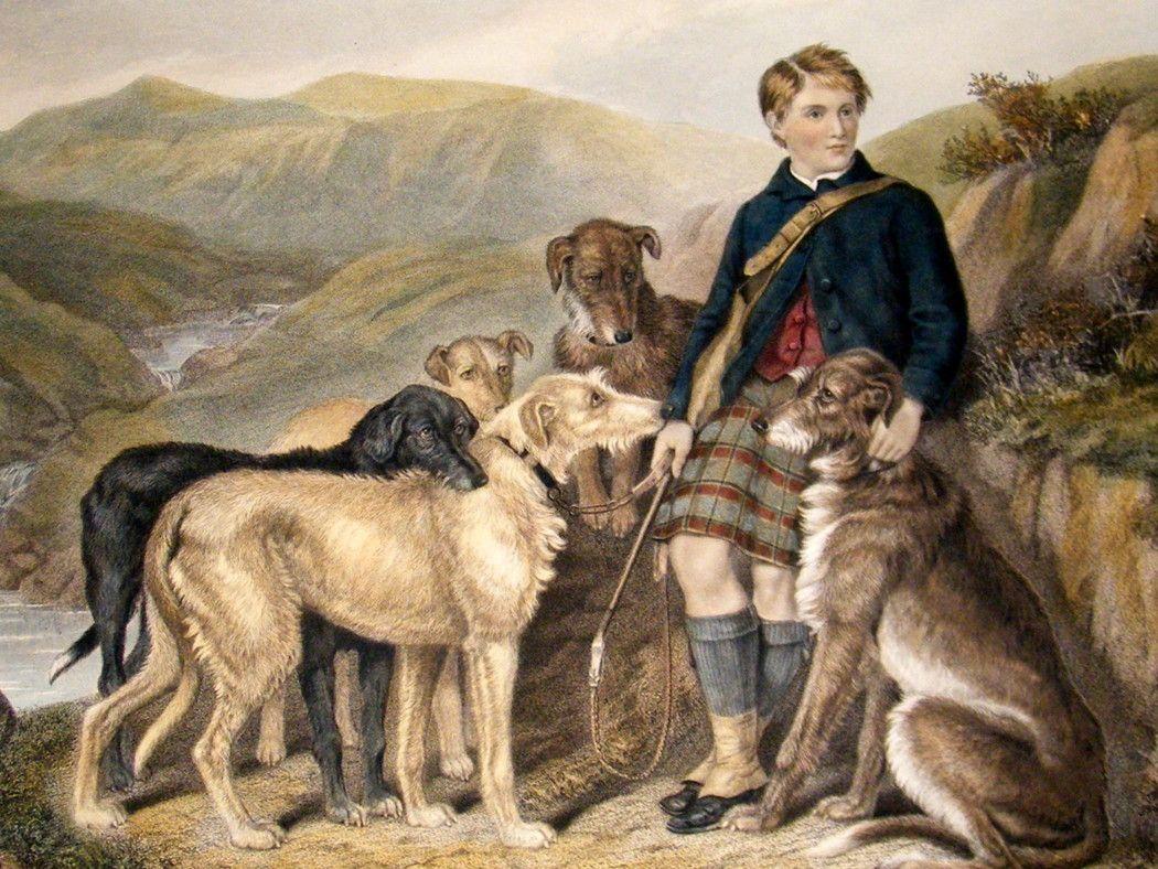 Hunting Dog Paintings Taylor 1883 Lg Folio Hand Col Stag